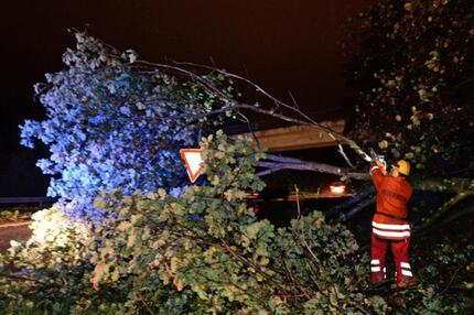 Umgestürzter Baum in Freiburg
