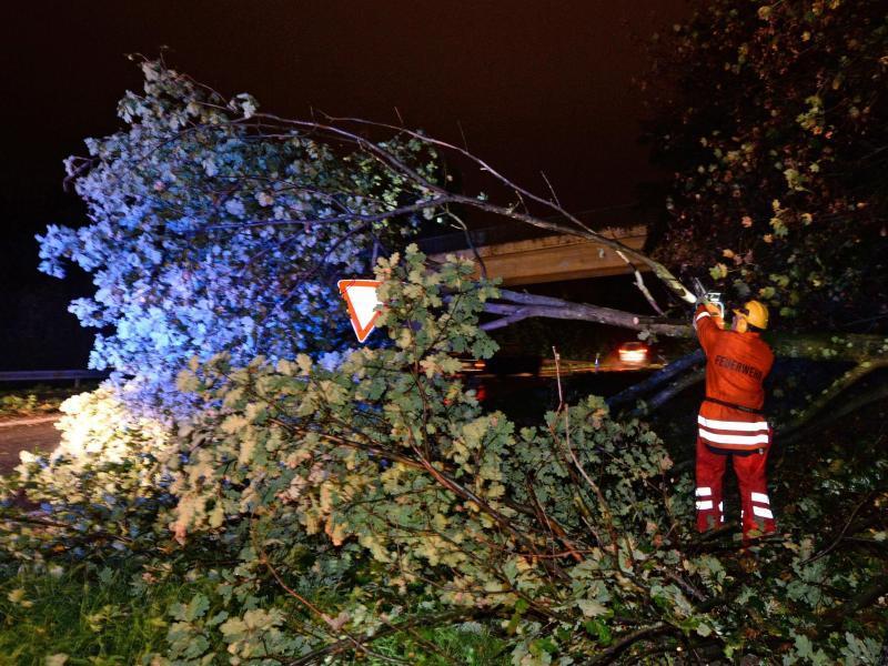 Bild zu Umgestürzter Baum in Freiburg
