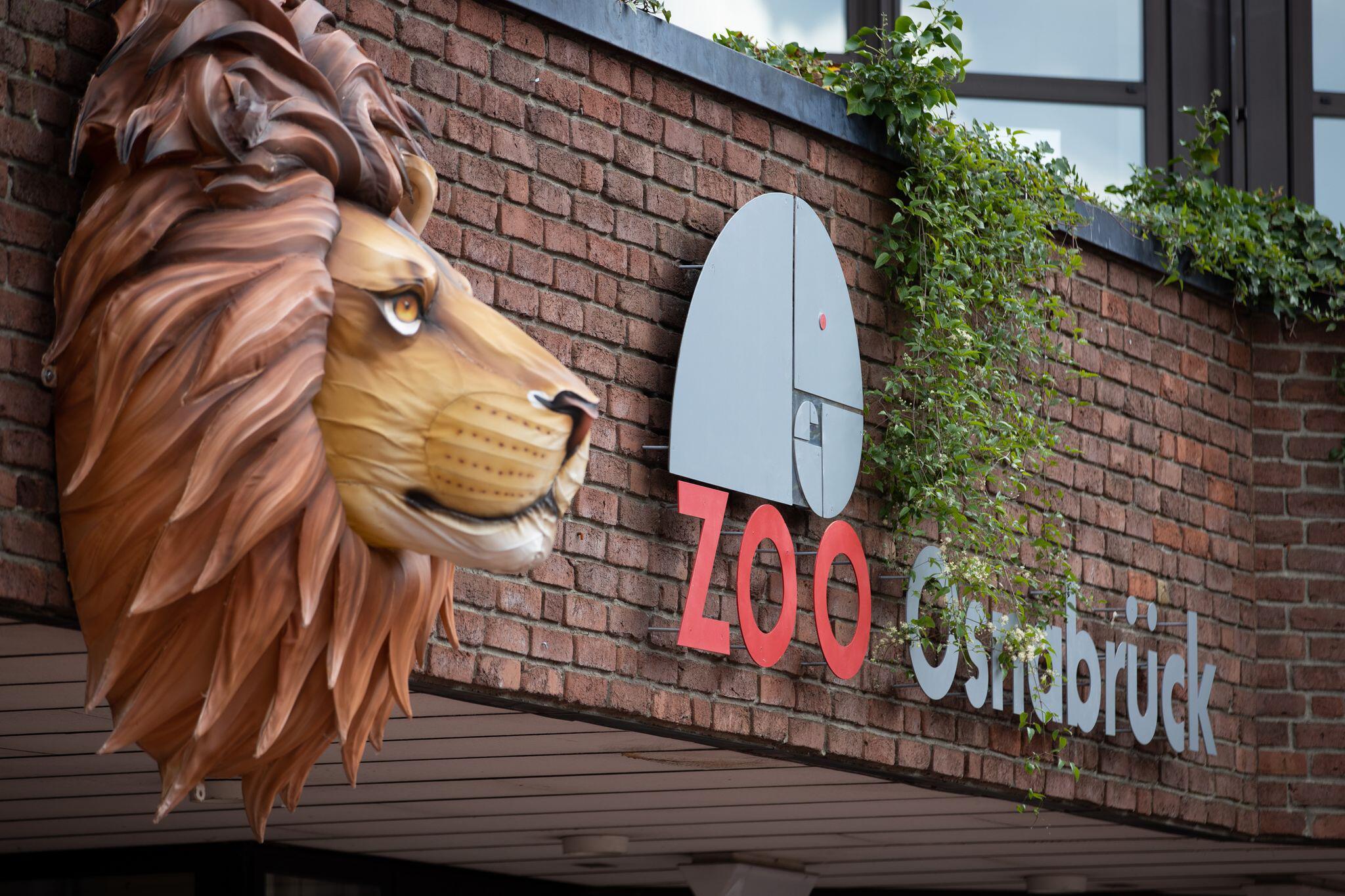 Zoo in Osnabrück: Tierpflegerin von Löwe angegriffen und verletzt