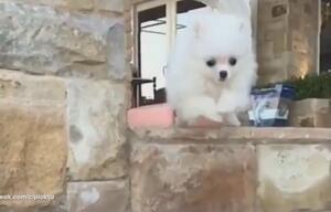 Kleiner Hund und die Kunst des Treppensteigens