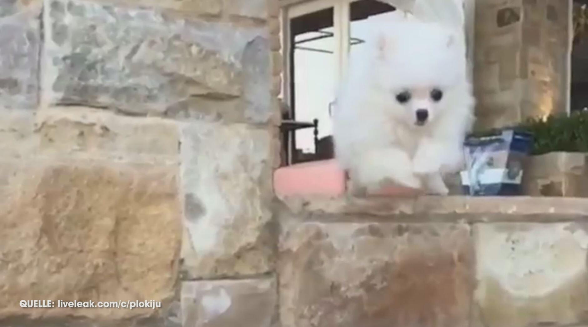Bild zu Kleiner Hund und die Kunst des Treppensteigens