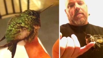 Bild zu Kolibri