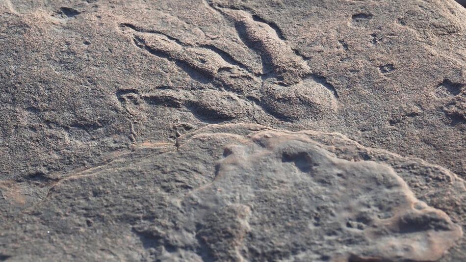 Dinosaurier-Fußabdruck in Wales entdeckt