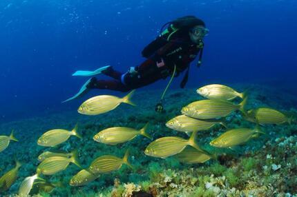 Tauchen auf Formentera