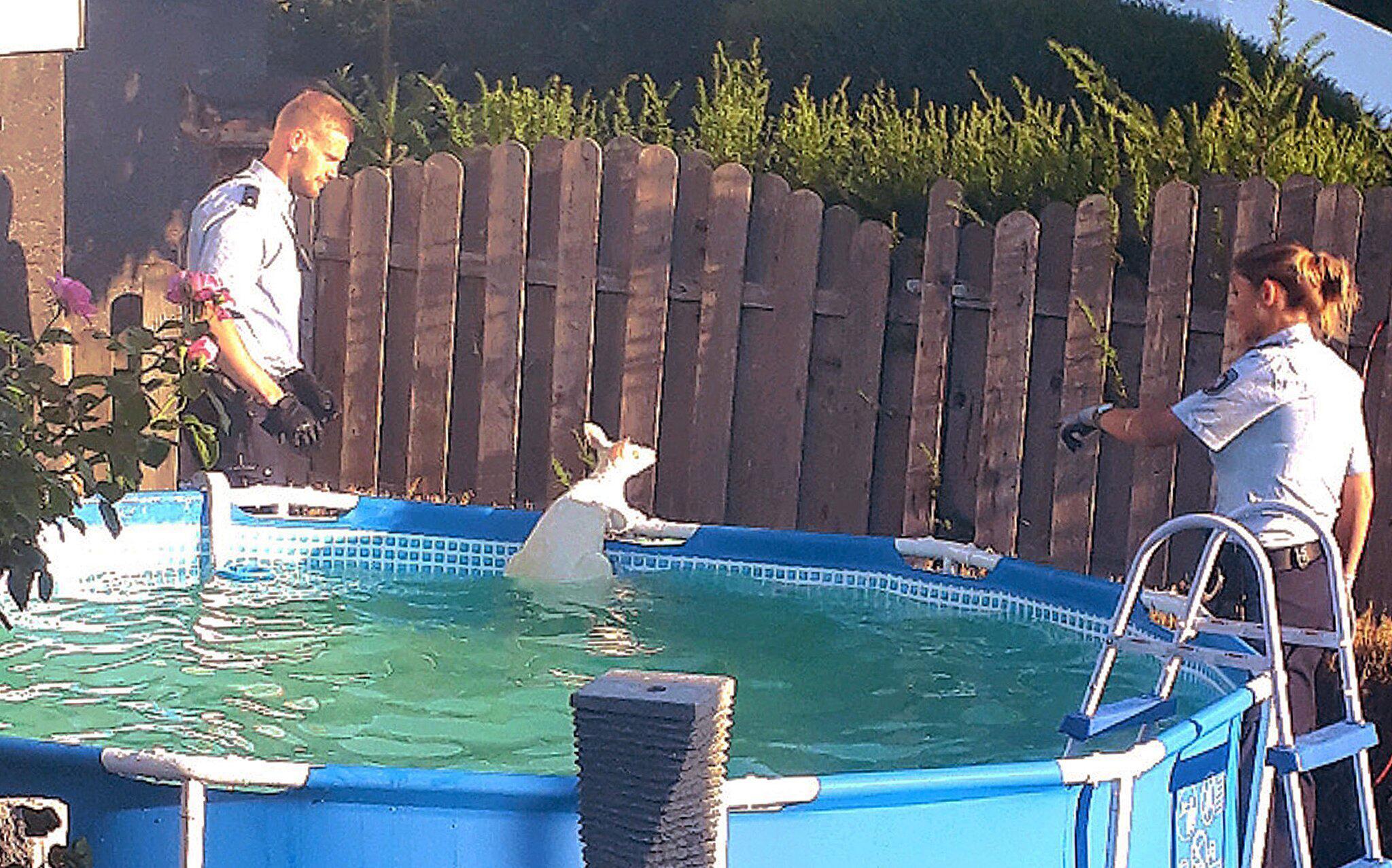 Bild zu Känguru im Pool