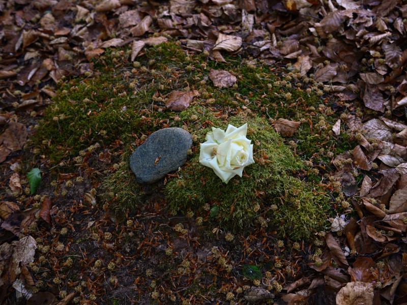 Bild zu Stein und weiße Rose liegen auf Moos