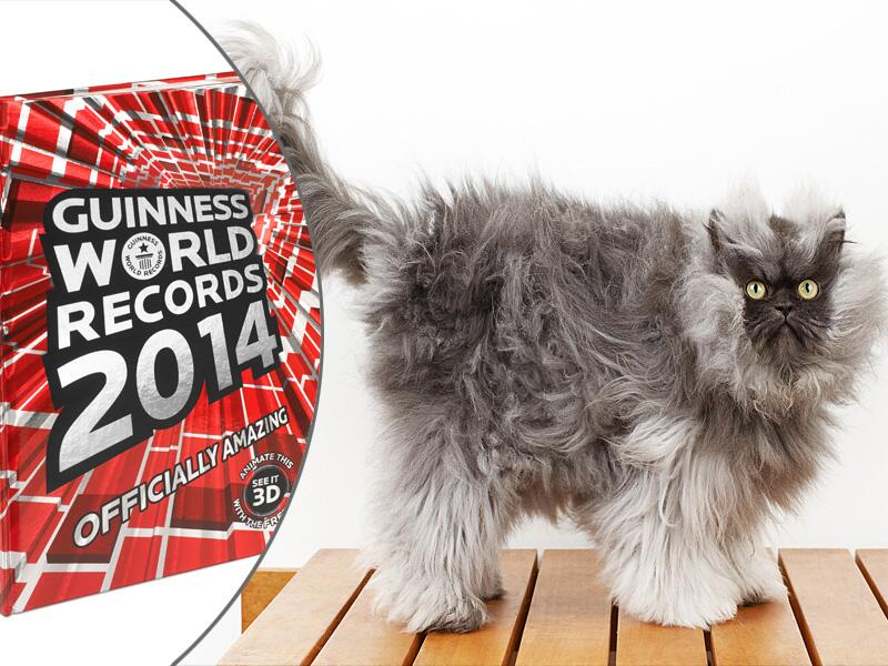 Bild zu Kater Colonel Meow aus dem neuen Guinnes World Records Buch 2014.