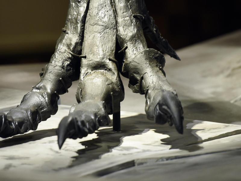 Bild zu T.rex Tristan