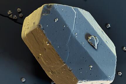 Haselnusspollen auf einem Zuckerkristall