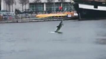 Bild zu Dublin, Fluss, Liffey, Delfin