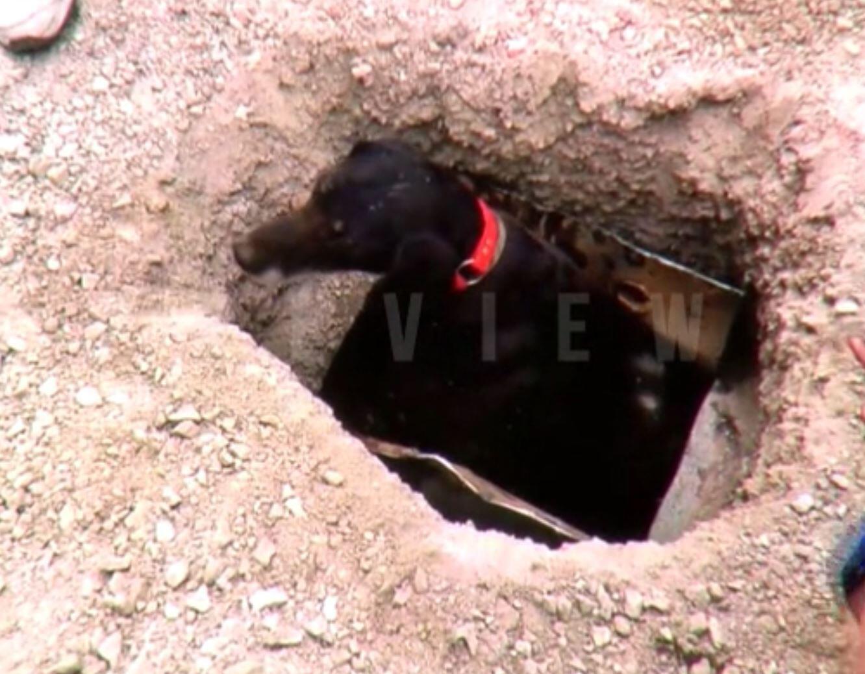 Bild zu Hund in Abwasserrohr