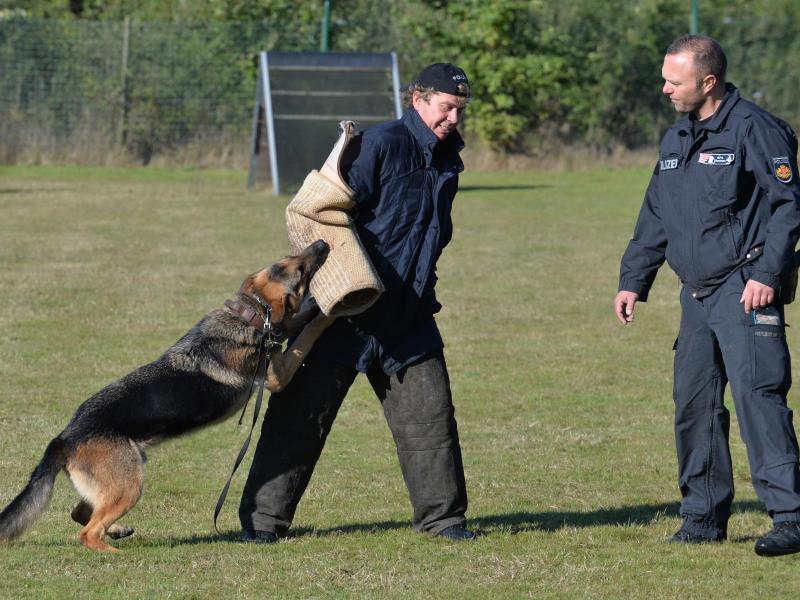 Bild zu Polizeihund beim Training