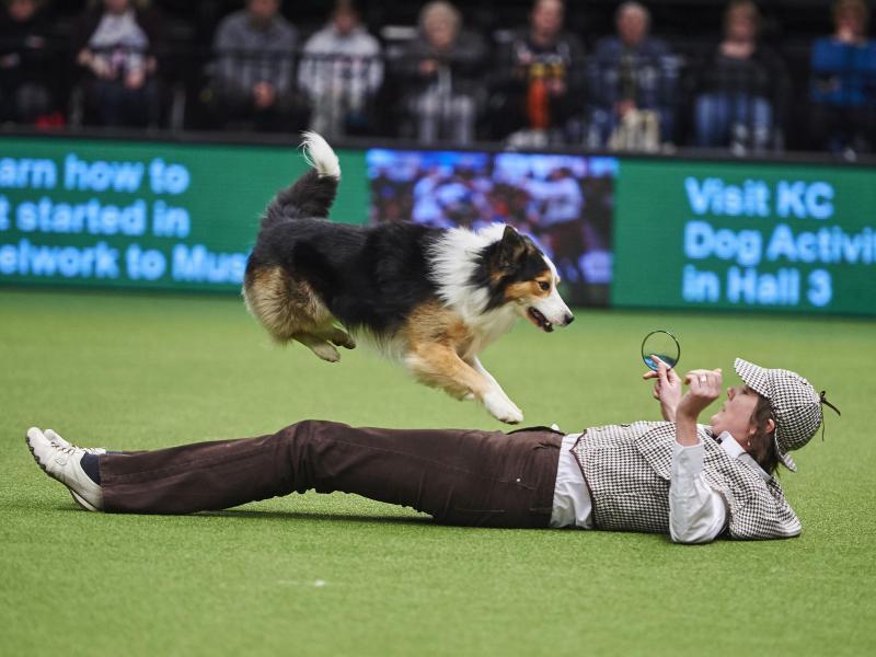 Bild zu Crufts Dog Show in Birmingham