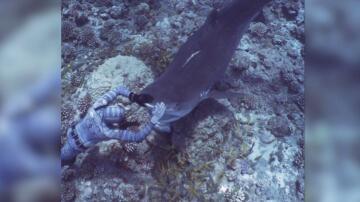 Bild zu Taucher, streichelt, Hai