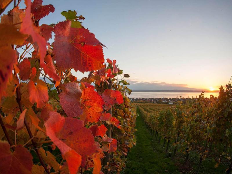 Bild zu Weinanbaugebiet Hagnau