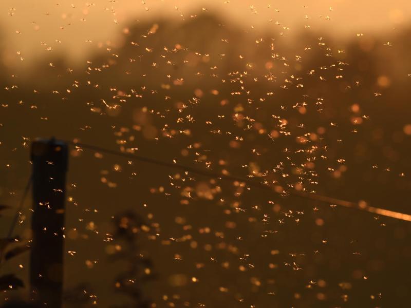 Bild zu Mücken-Zeit