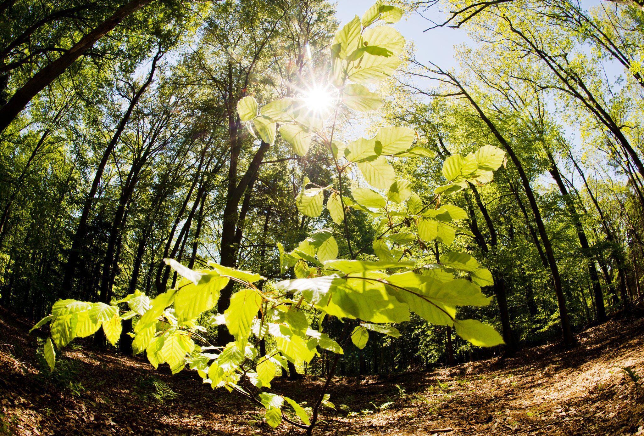 Bild zu Trockenheit im Wald