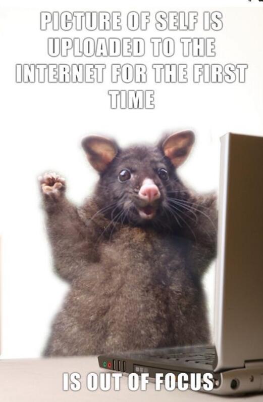 Kleines Possum wird dank diesem Foto zum Star im Internet ...