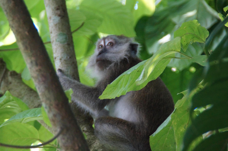 Bild zu Singapur Zoo