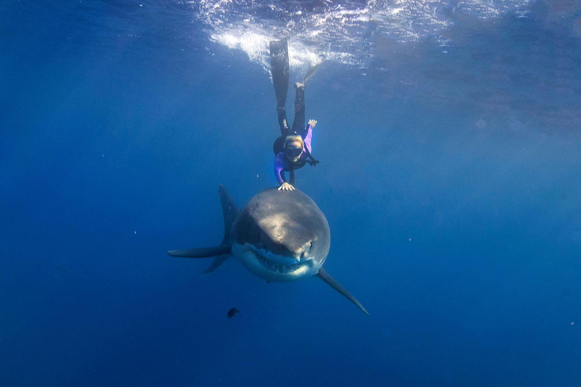 Bild zu Ocean Ramsey