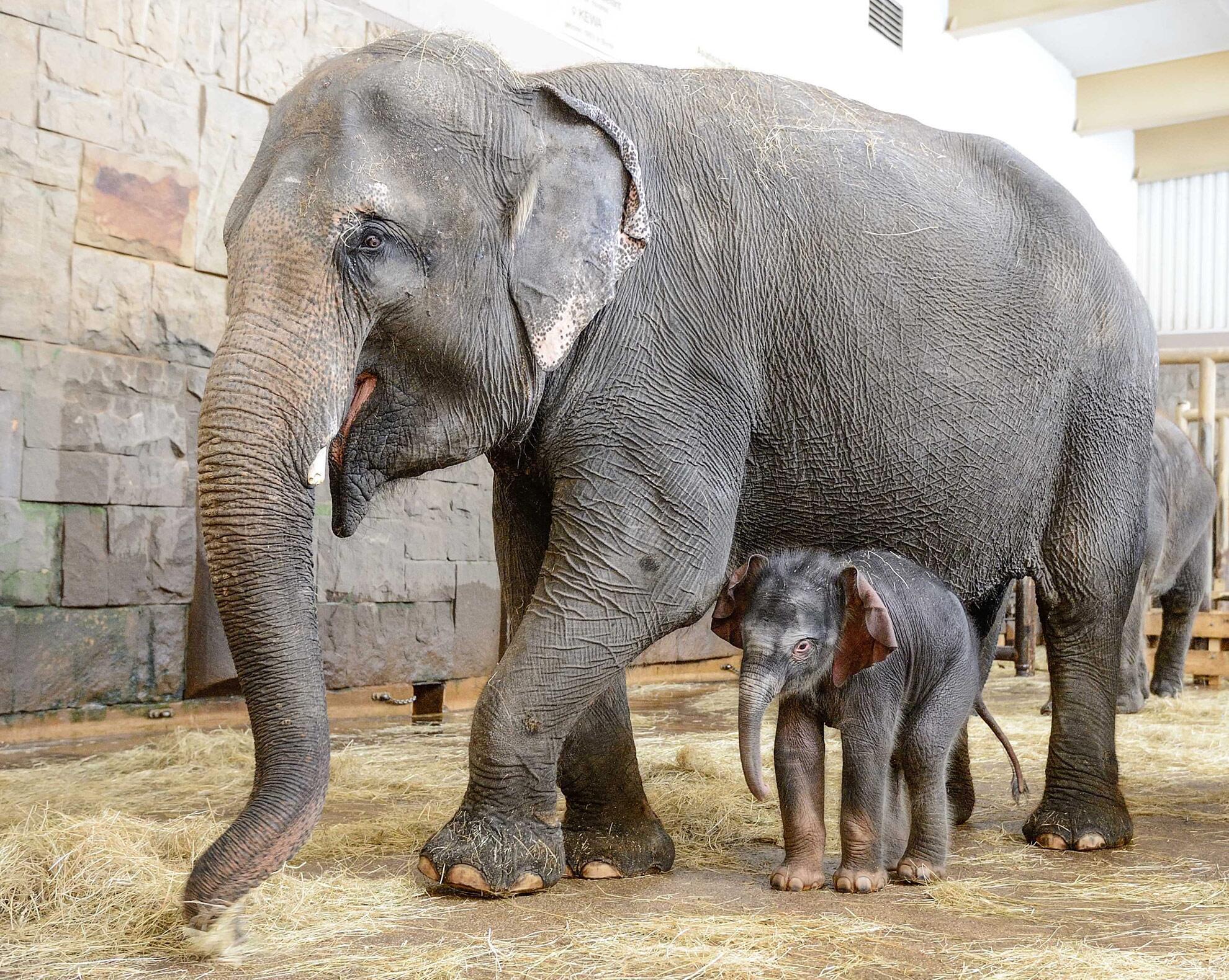 Bild zu Elefantenbaby