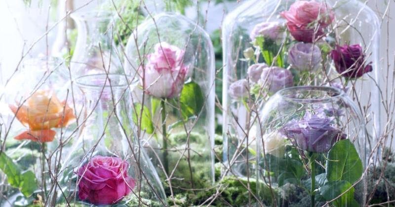 Rosen unter glaskuppeln dekorieren web de for Zimmer deko rosen