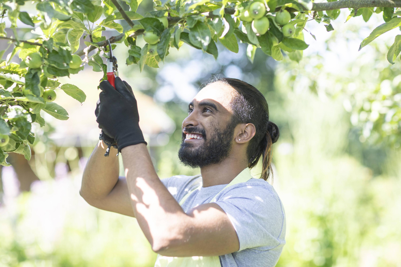 Bild zu Mann schneidet Baum