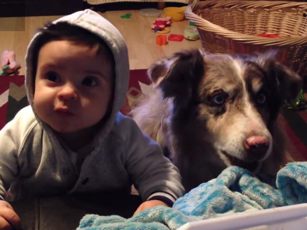 Bild zu Baby und Hund