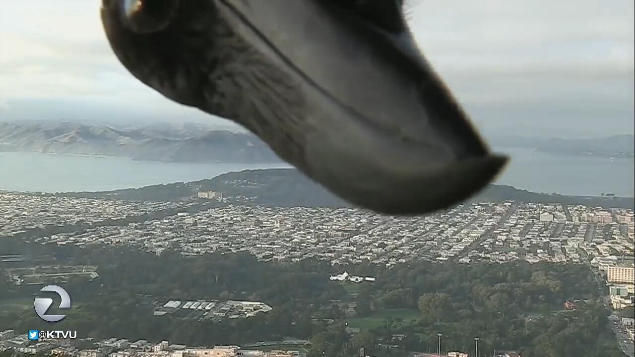 Bild zu Schau mal, wer da kuckt! Neugieriger Vogel unterbricht Wetterbericht