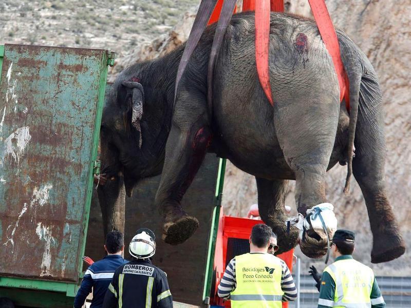 Bild zu Elefant am Haken