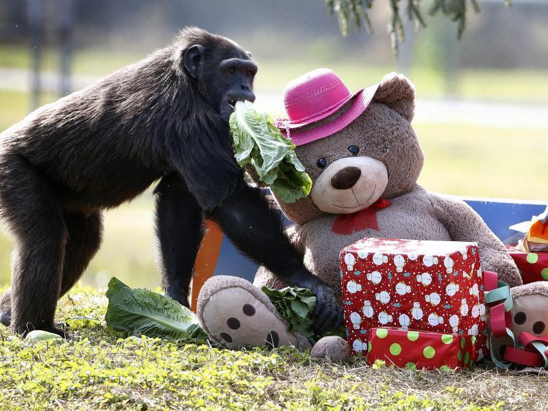 Bild zu Wen kümmert der Teddy