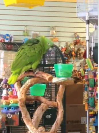 Bild zu Papagei