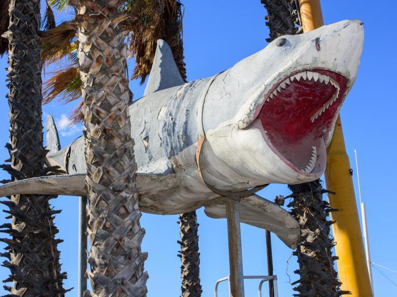 Bild zu «Der Weiße Hai»