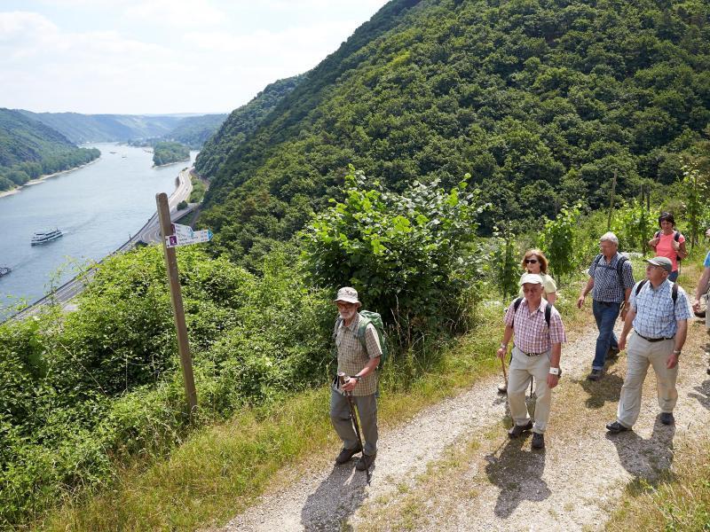 Bild zu Wanderer auf der Traumschleife Rheingold