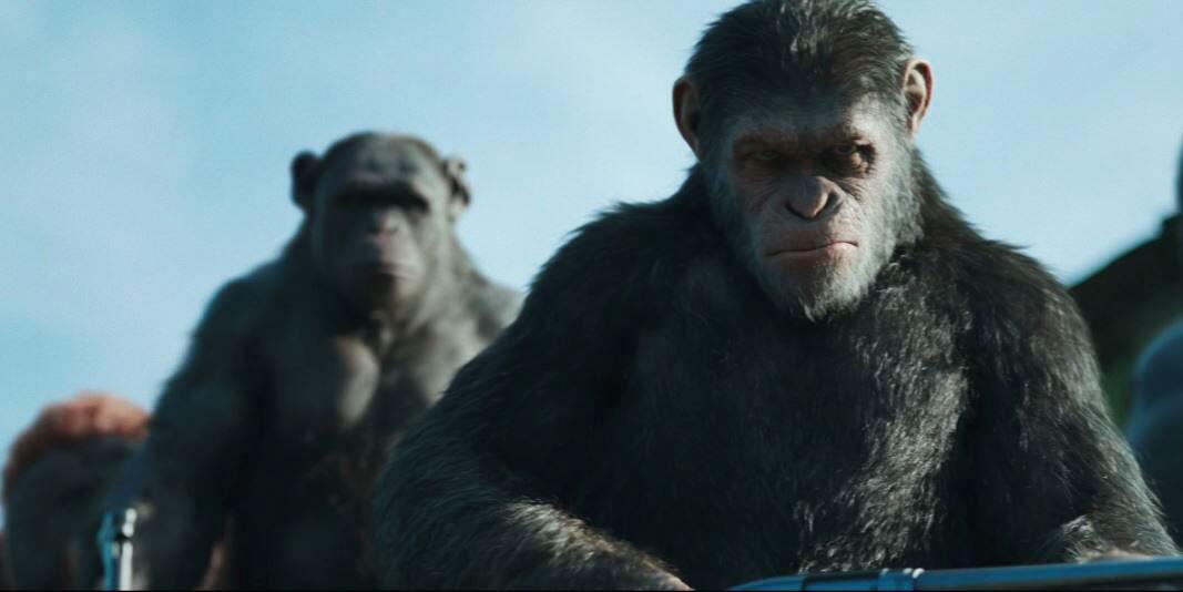 Bild zu Planet der Affen: Survival
