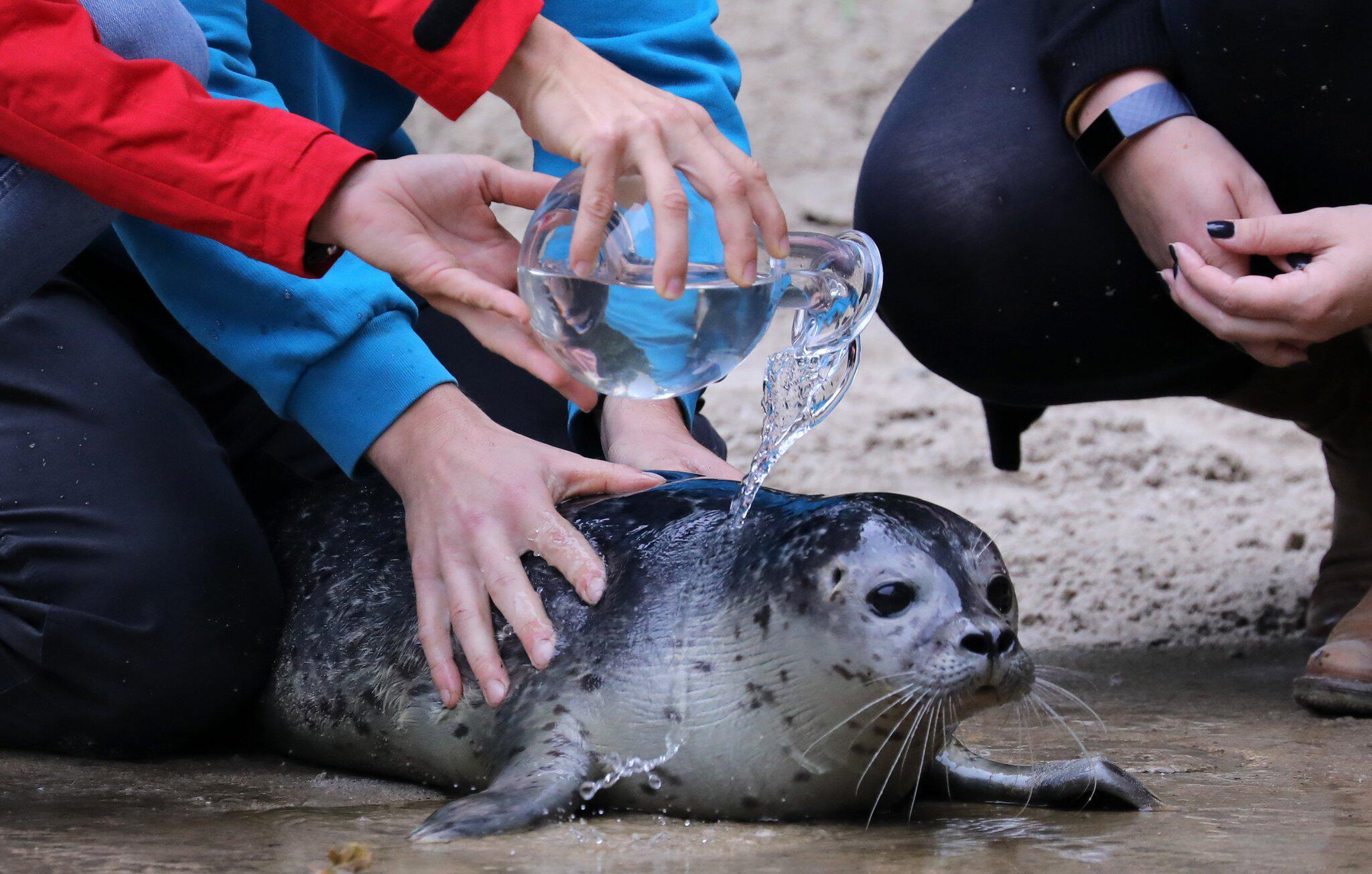 Bild zu Seehund-Taufe