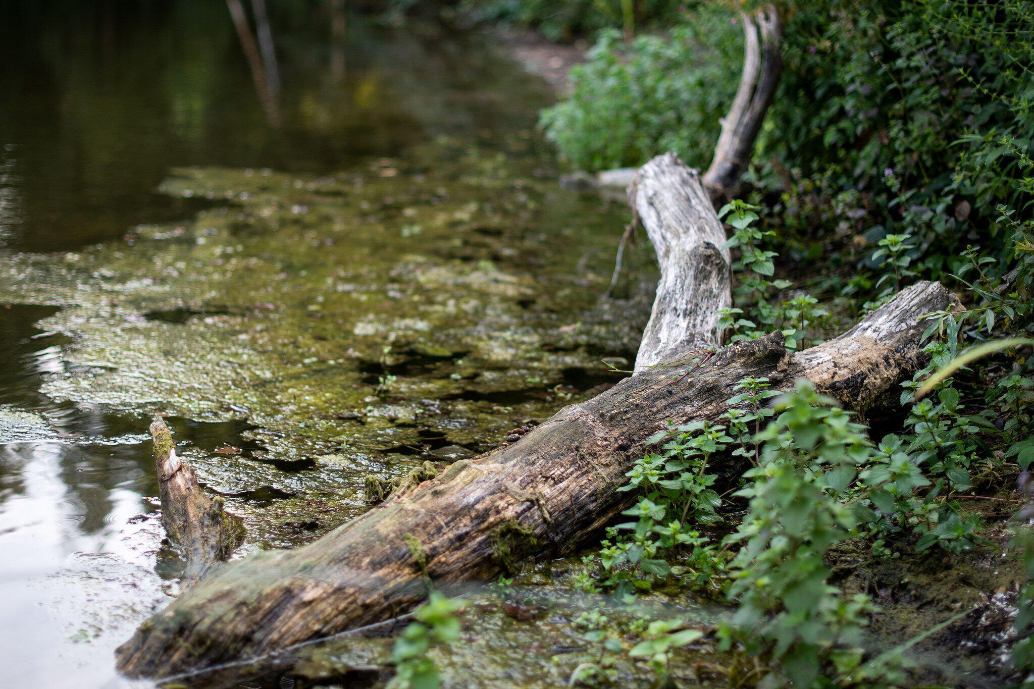 Bild zu Anakonda in See in Meerbusch gesichtet