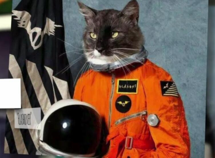 Bild zu Die besten Albumcover mit Katzen