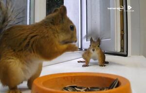 Eichhörnchen, Futter,
