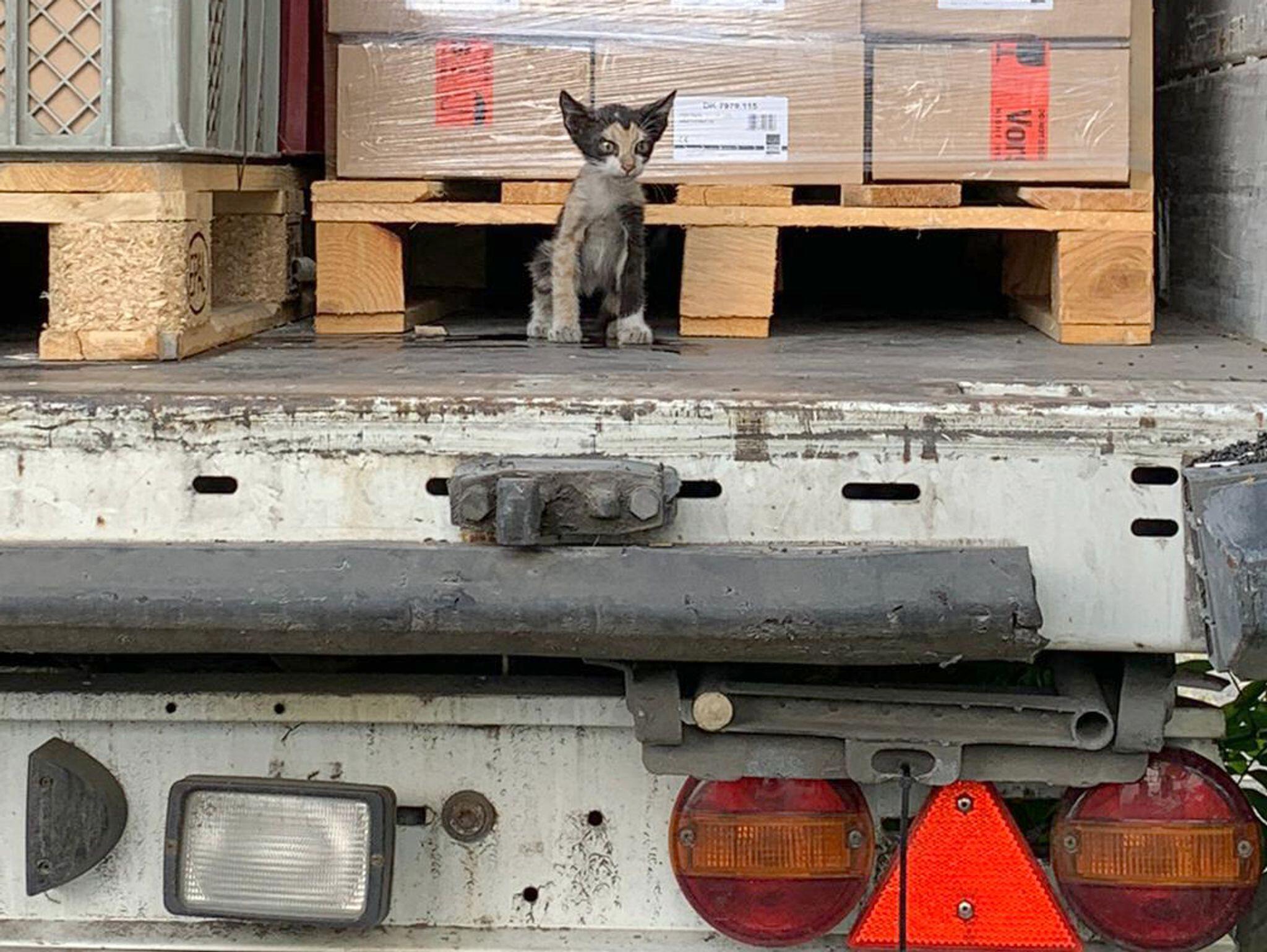 Bild zu Katze, Lkw