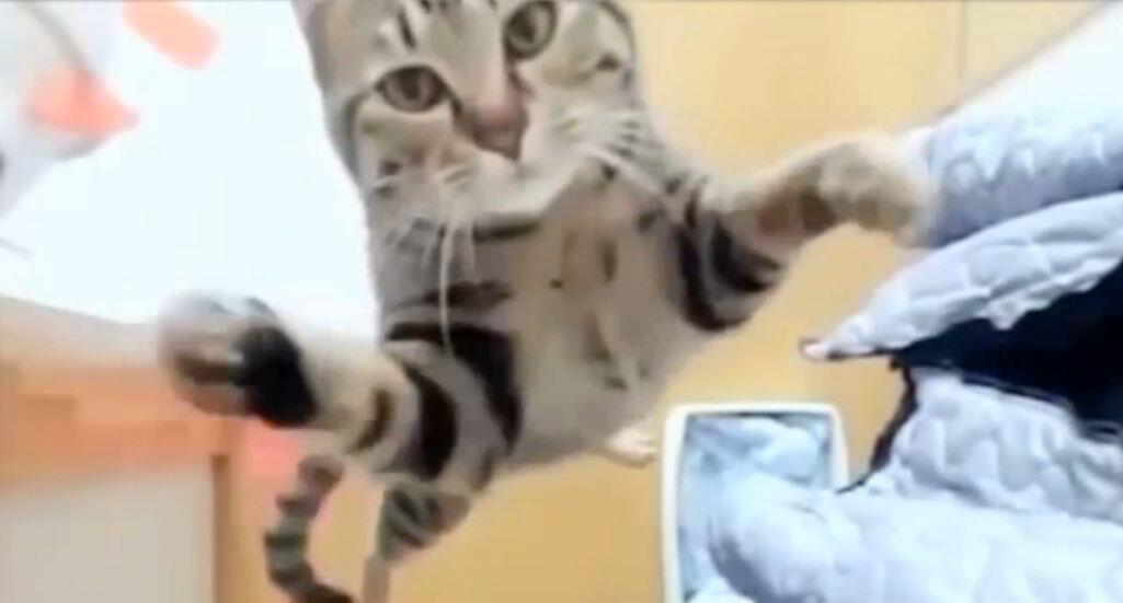 Bild zu Katze verzweifelt beim Springen