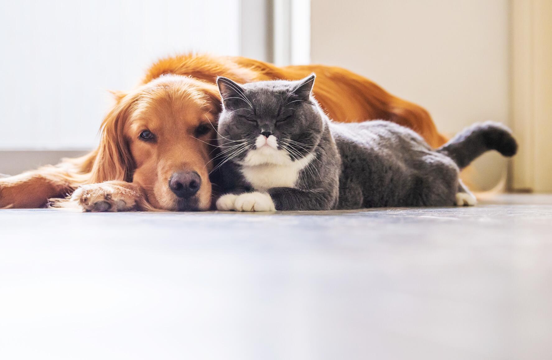 Bild zu Tierversicherung, Haftpflichtversicherung, Krankenversicherung , OP-Versicherung