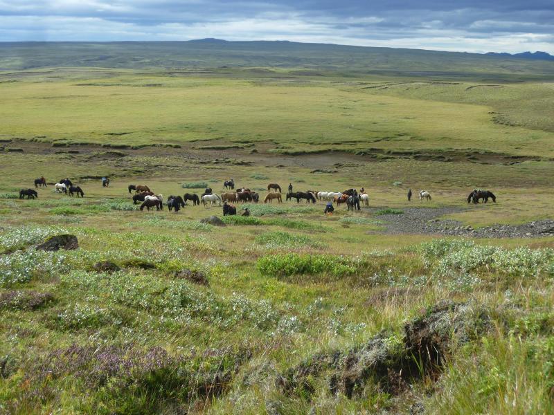 Bild zu Schutz für Islandpferde