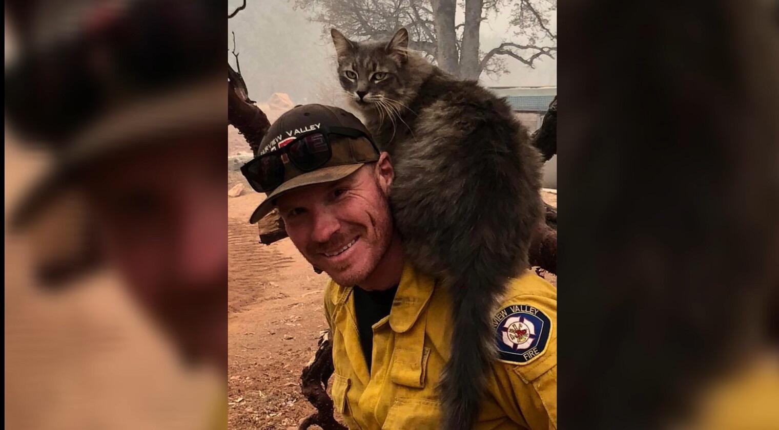 Bild zu Feuer, Kalifornien, Katze, Feuerwehrmann