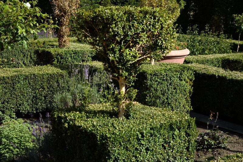 buchsbaum leidet unter plagen alternative suchen. Black Bedroom Furniture Sets. Home Design Ideas