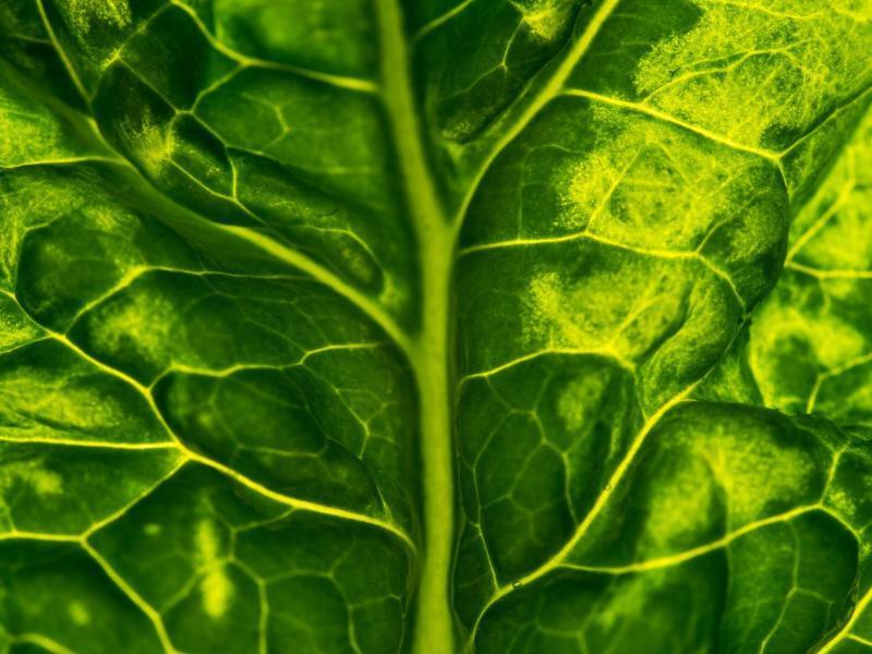 Bild zu Spinat