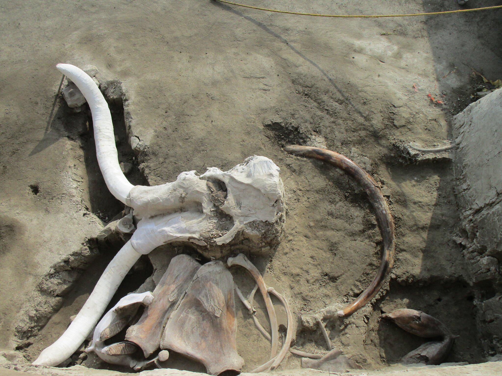 Archäologen in Mexiko machen weltweit größten Fund von Mammut-Knochen - Panorama
