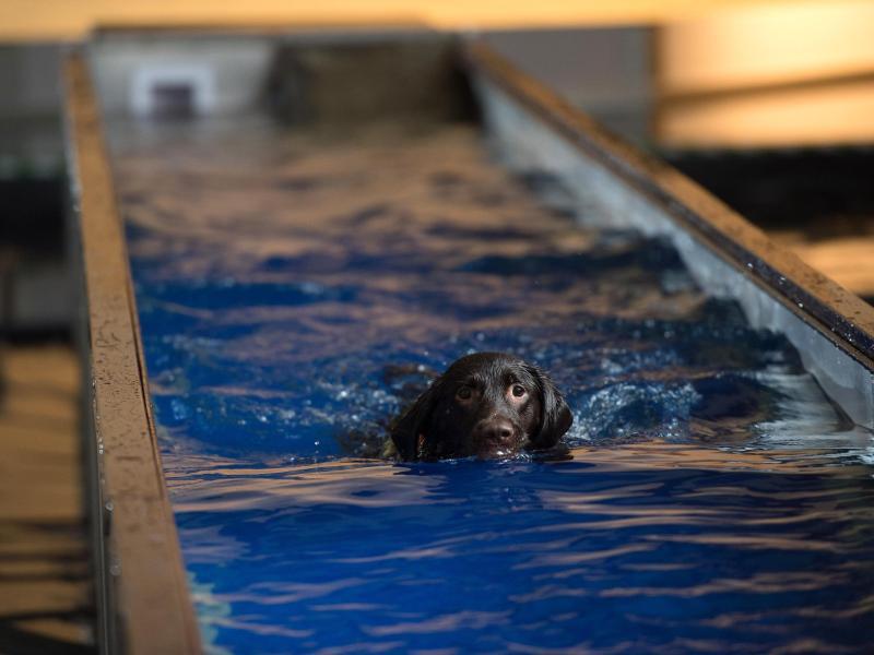 Bild zu Bahnen schwimmen