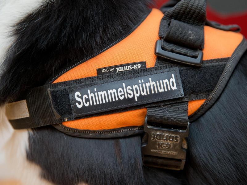 Bild zu Zertifizierter Schimmelspürhund