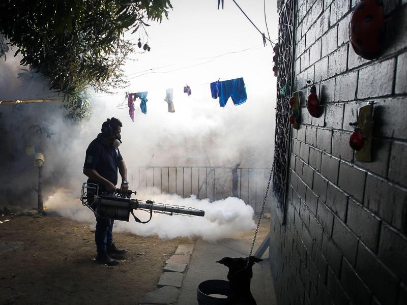 Bild zu Zika-Virus